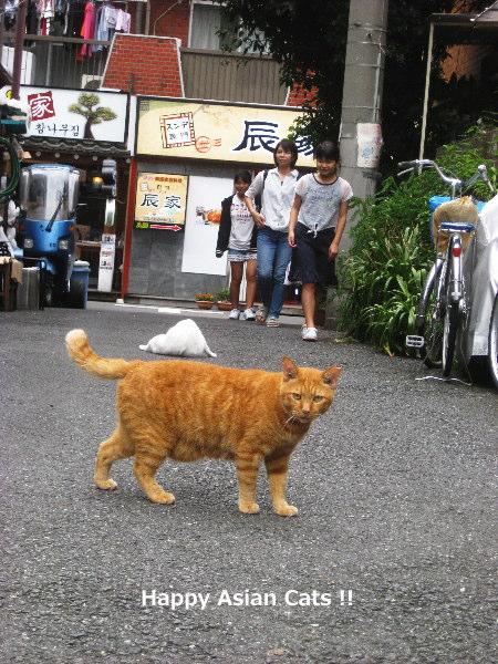 1018cats5.jpg